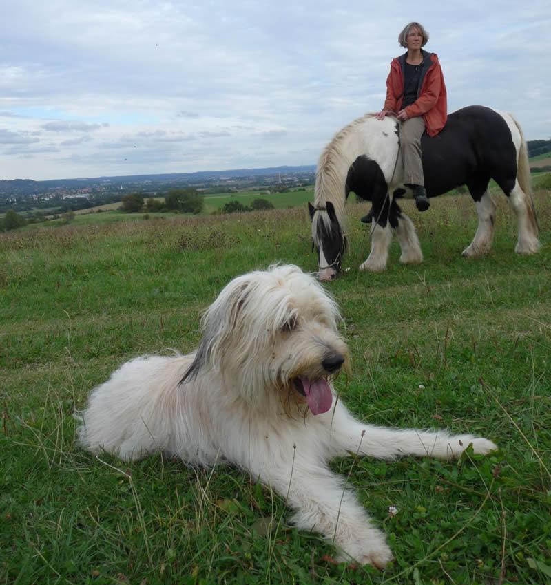 Schafpudel und Pferd